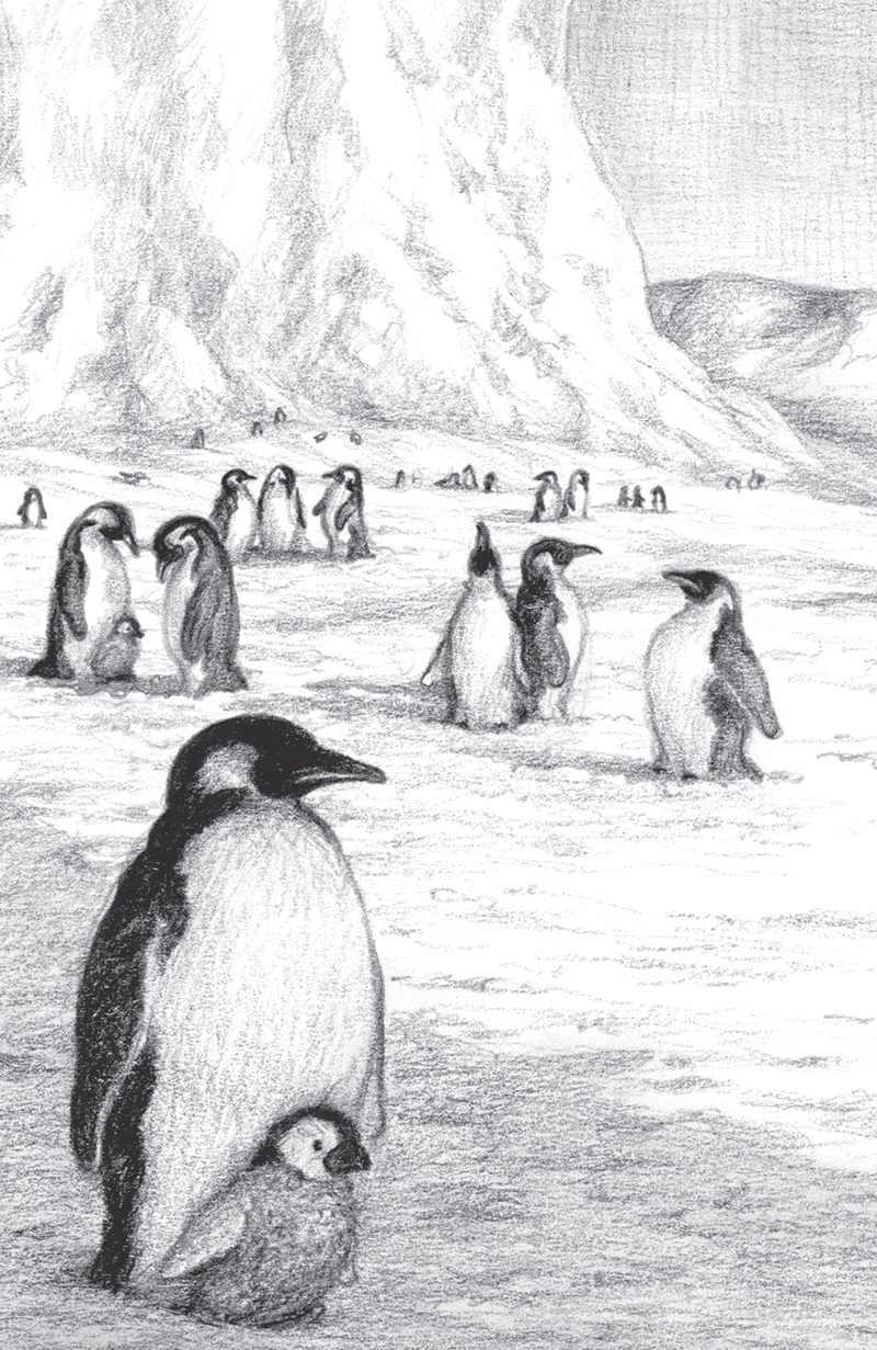7 carti cu … pinguini – Mari si mici