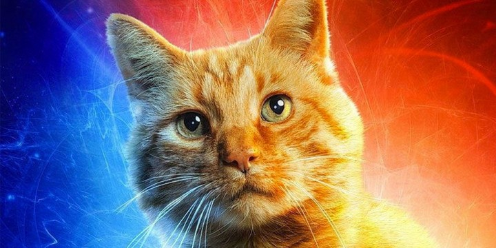 CaptainMarvel-cat