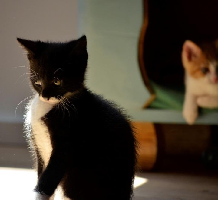 kitten-3551363_1920