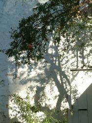 Nafplio-perete