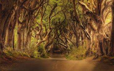 trees-3464777_1920