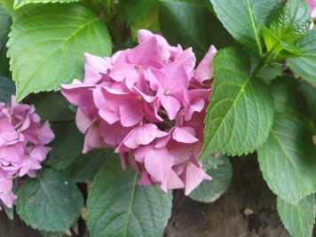 floare4