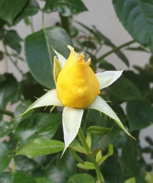 floare5